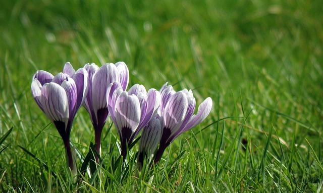 fialová kytička