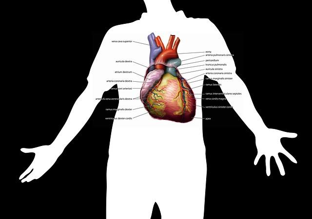 zvětšené srdce